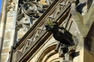 A gargoyle on St. Vitus