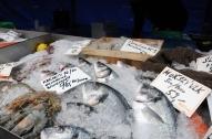 FishOnIce